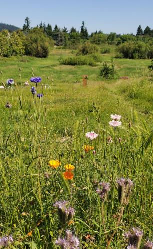 Wild-Flowers-Wisdom-Internship-Ecological-Knowledge-Day